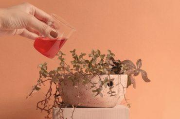 sangue-fertilizante-plantar-a-lua